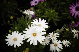 flores do méxico para o mundo
