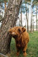 vaca perto de uma árvore