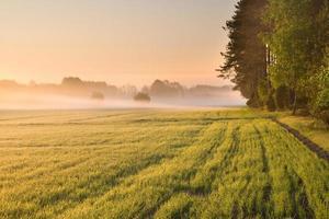 amanhecer do campo do final da primavera.