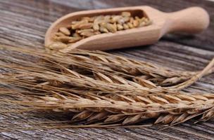 pilha e espigas de grãos de centeio em fundo de madeira foto