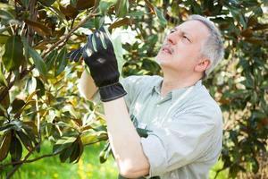 jardineiro podando uma árvore foto