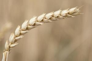colheita de cereais