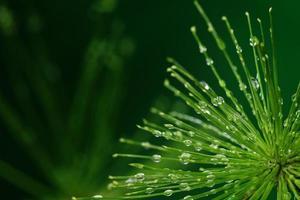 planta fresca com gotas de água sobre fundo verde