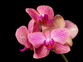 linda orquídea em fundo escuro foto