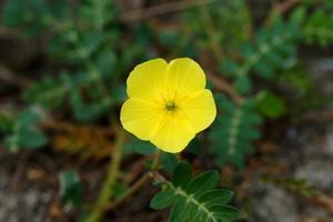 flores amarelas na praia.