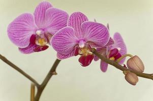 orquidário foto