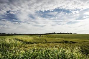 campos de cultivo. foto
