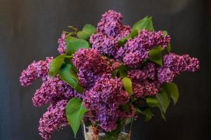 lilás comum roxo em um vaso em fundo preto foto