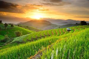 terraços de arroz no norte da tailândia