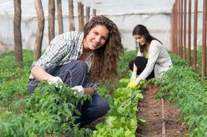 mulher trabalhadora na colheita da casa verde foto