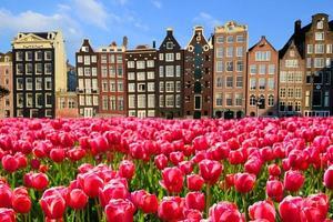 tulipas com casas no canal de amsterdã