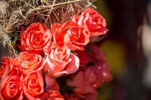 beleza das rosas foto