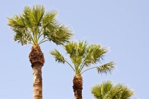 palmeiras em dia ensolarado foto