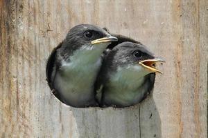 passarinhos em uma casa de passarinho foto