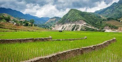 plantações de arroz. Vietnã