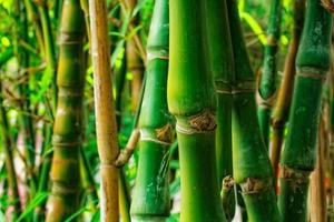 linda borda de bambu foto