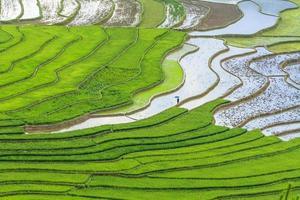campo de arroz em socalcos