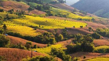 campo de arroz em terraço na vila de Mae-Jam