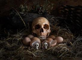 crânio e ovos no ninho de palha, foto