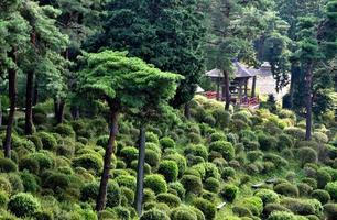 casa do sino no santuário japonês foto