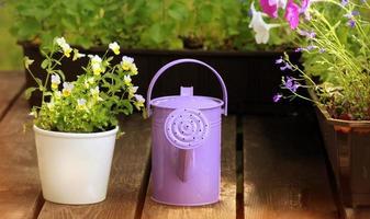 regando flores na varanda
