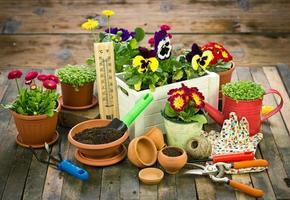 ferramentas de jardinagem e flores foto