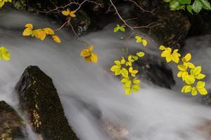 folhagem de outono e fluxo que flui foto