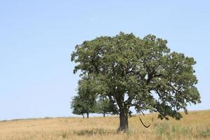 balanço de corda em uma árvore foto