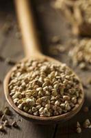 trigo sarraceno orgânico seco cru