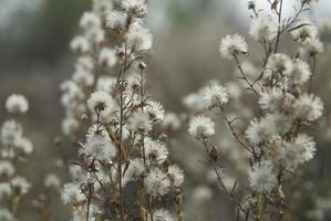 flores silvestres caem fundo foto