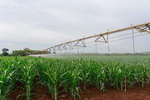 equipamento de irrigação que rega uma safra de milho.