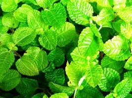 folha verde fresca textura natureza