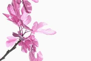 flor em branco foto