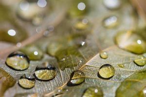 gotas de água foto