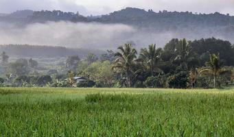 campo de arroz no outono