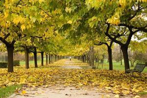 caminho sob um telhado de folhas verdes e amarelas foto