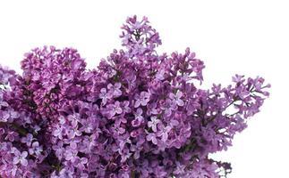 fundo floral, isolado foto