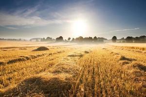 campo de restolho ao nascer do sol