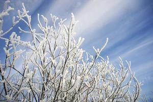 galhos de árvores congelados no fundo do céu de inverno foto
