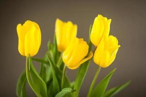 tulipas amarelas em uma superfície cinza
