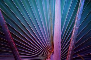 arte abstrata em folha de palmeira
