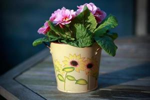 flores de saintpaulia em um vaso durante o dia