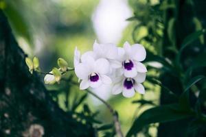 orquídea vintage.