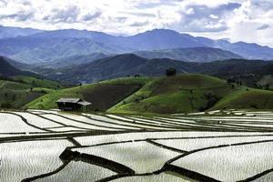 agricultura tradicional em chaing mai, norte da tailândia.