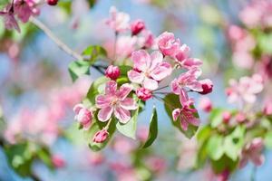 linda rosa florescendo.