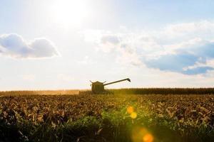 silhueta da máquina para colheita de milho