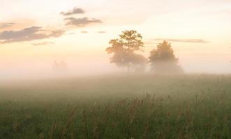 névoa matinal sobre o prado foto