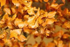 folhas secas em um galho foto