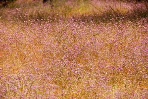 campo de flores do parque nacional de yosemite