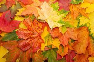 folhas coloridas de outono